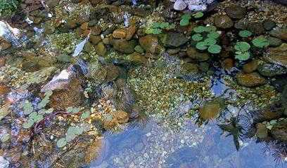 Vijverwater: hoe zorg je voor goede kwaliteit water in je vijver
