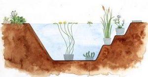Plantzones vijver