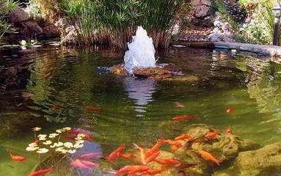 Vijverpomp watercirculatie installatie onderhoud for Natuurlijke vijver zonder pomp