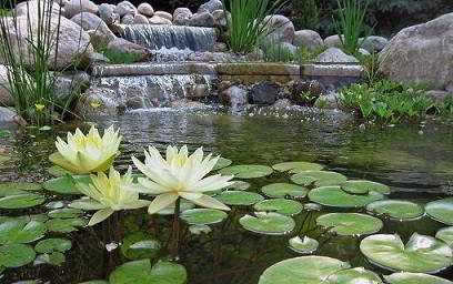 Vijver ontwerpen vijver inrichten vijvermaterieel for Natuurlijke vijver maken
