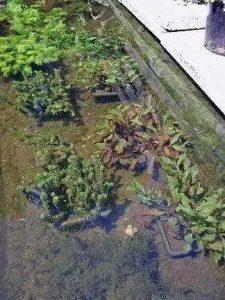 bacteriën in de vijver zorgen voor helder water